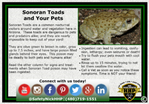 Sonoran Toads can be dangerous or deadly to your pets