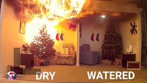 Dry vs Watered Christmas Tree Fire Dangers